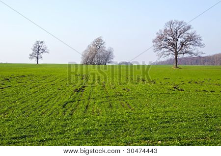 Agricultural Field Sown Grass Tree Molehill Spring