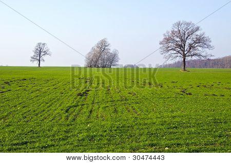 Campo agrícola sembrado césped árbol Molehill primavera