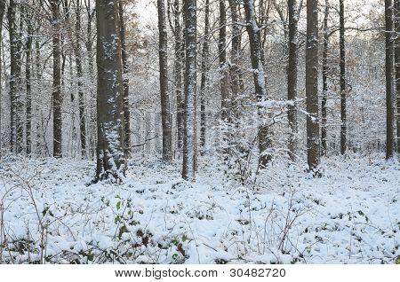 Bosque en la nieve