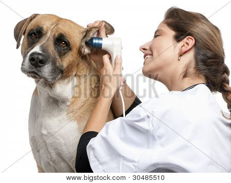 Vet examining a Crossbreed dog, dog's ear with an otoscope in front of white background