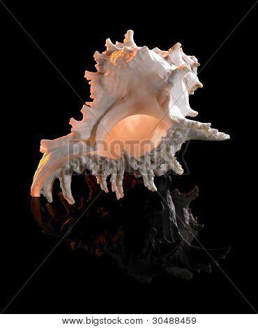 Yellow Illuminated Seashell