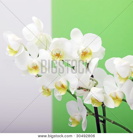 Decorative White Orchids