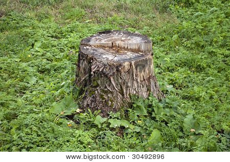Old Stump In Grass
