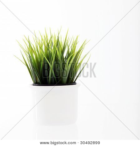Potted Fresh Young Green Grass