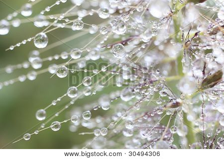 Tracery Of Water Droplets