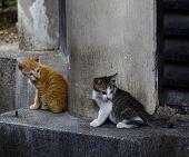 Wild Cat On Street In Kuala Lumpur, Malaysia poster