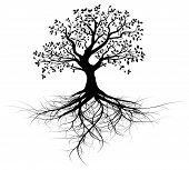 stock photo of silhouette  - whole black tree with roots isolated white background vector - JPG
