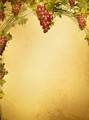 stock photo of grape-vine  - Illustration of red grape vine frame at grunge background with copyspace for your text - JPG