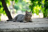 Cute Tabby Cat Sitting On The Concrete Floor In The Garden Public Park. poster