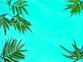 Creative Minimal Summer Leaf Sale Idea. Green Leaf Branches. Palm Leaves On Sky Blue Marine Color. T poster