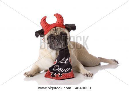 Pug Dog In Devil Costume