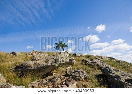 A Tree On Top