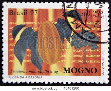 A stamp printed in Brazil shows Mahogany Swietenia macrophylla king