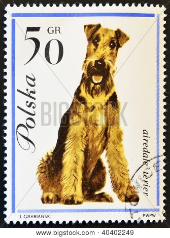 POLAND - CIRCA 1963: stamp printed in Poland shows Airedale terrier dog circa 1963.