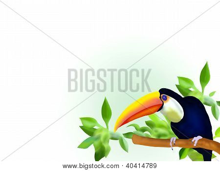 A Hornbill On Branch And Leaves Background