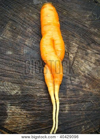 unusual carrot lying on a stub