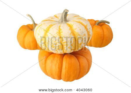 Little Miniture Pumkins