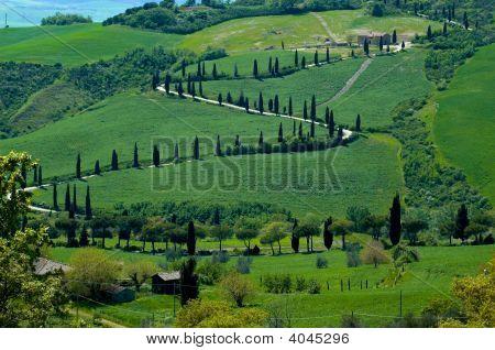Tree-Line Road, Italy