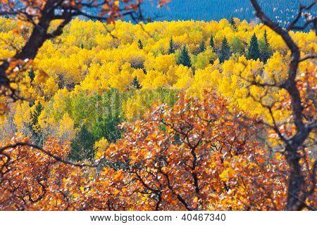 Fall Colors Framed