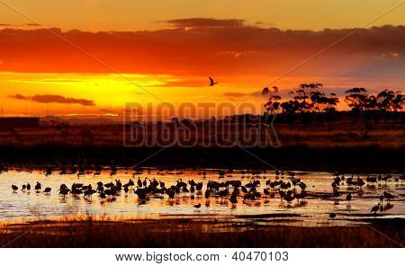 Lakeside Habitat Sunset, Victoria, Australia