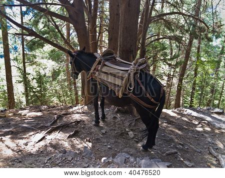 Donkey - ambulance transportation at Samaria gorge