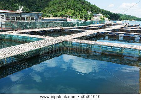 Aquatic Farm