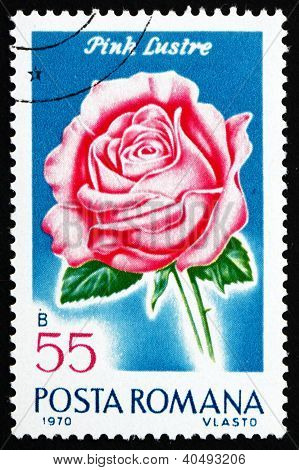 Postage stamp Romania 1970 Pink Luster, Rose Cultivar