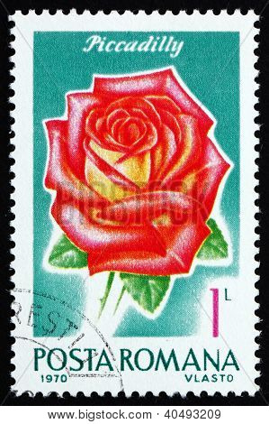 Postage stamp Romania 1970 Piccadilly, Rose Cultivar