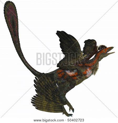 Microraptor On White
