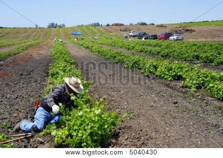 mexikanischer Farmarbeiter