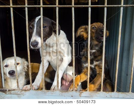 Stray dogs in the shelter