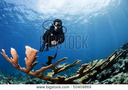Female Scuba Diver and Coral