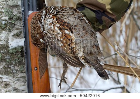 Hunting For A Hazel Grouse