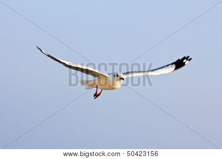 A Photo Of A Flying Seagull.