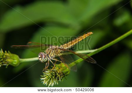 Dragonfly On A Flower