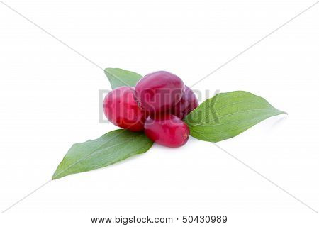 Cornel berries isolated on white