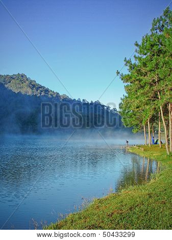 Lake and Pine Forest, wild landscape