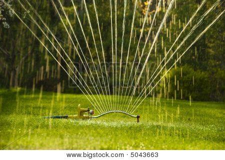 Sprinkler Close Up