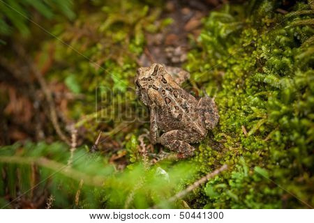 frog on mossy ground