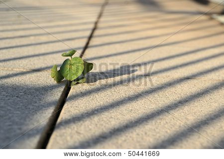 fight for survival of a small plant