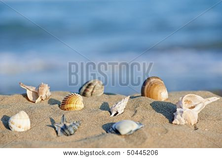 shells lying on sand beach in front of blue sea