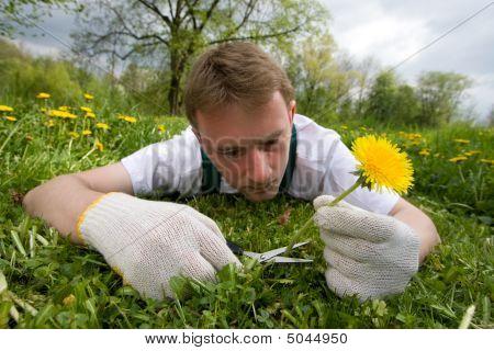 Crazy Gardener