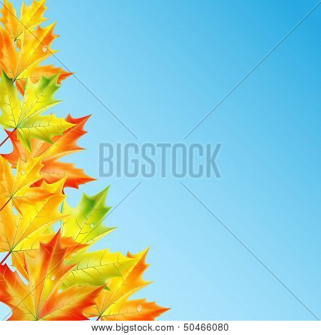 Autumn Background.autumn Maple Leaves Against The Blue Sky .vector