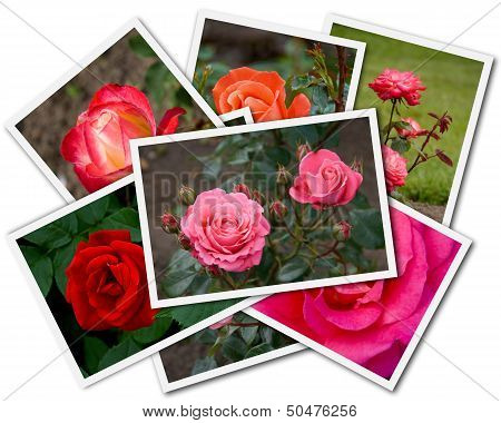 Roses Collage