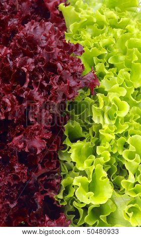 Lettuce Leaves Background