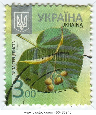 UKRAINE - CIRCA 2013: A stamp printed in Ukraine shows image of the Tilia cordata  is a species of Tilia native to much of Europe and western Asia, circa 2013.