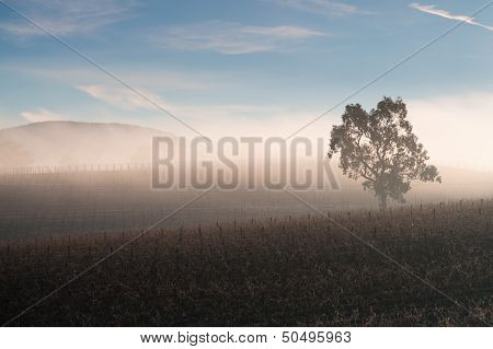 Sunrise Over Yarra Valley In Winter