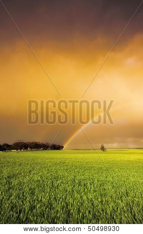 Rainbow in a fresh green field