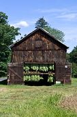 picture of tobacco barn  - Connecticut tobacco leaves air drying in a barn - JPG