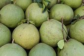 picture of pamelo  - Pomelo or pummelo - JPG